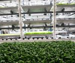Understanding Vertical Farming and How It Works?