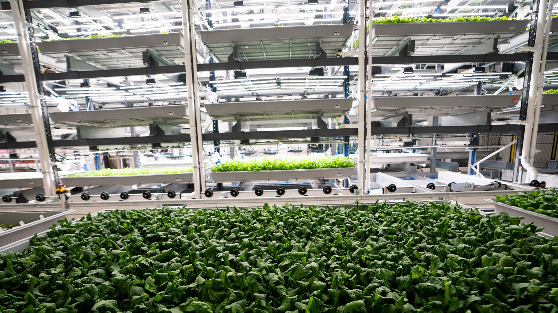 understanding vertical farming and how it works